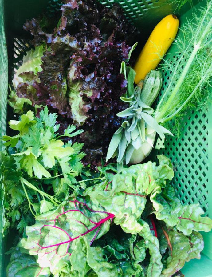 Gemüsekiste im Juni