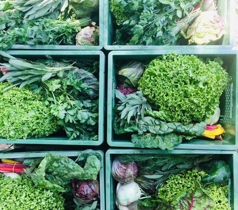 Gemüsekiste Ende Juni