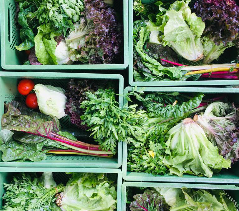 Gemüsekiste Ende Juli