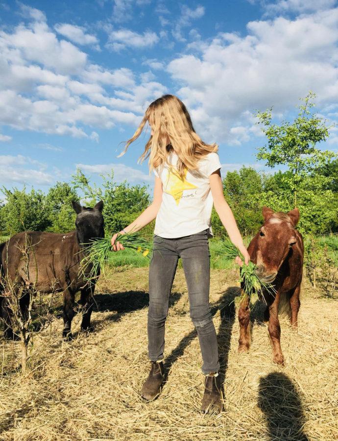 Fotoshooting mit Pferden