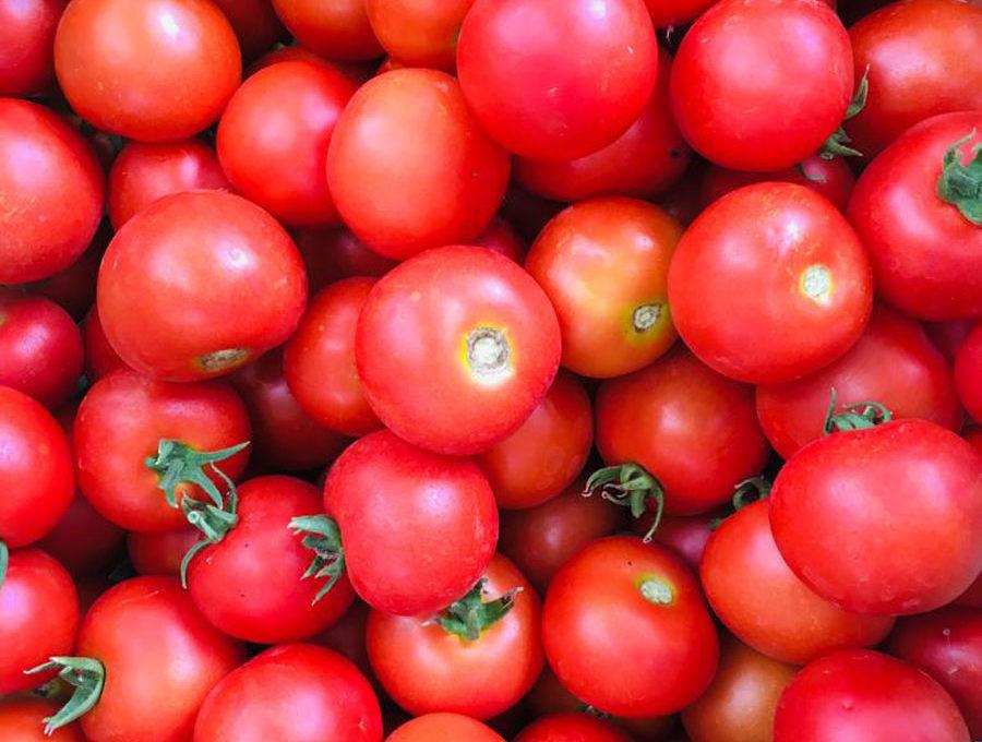 Knallrote Tomaten