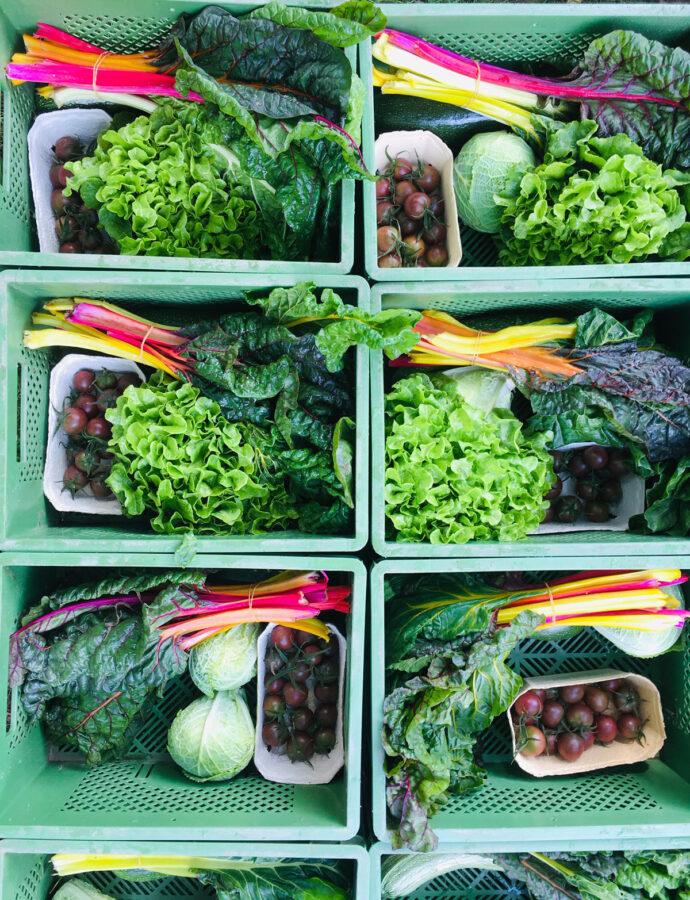Gemüsekiste Anfang August