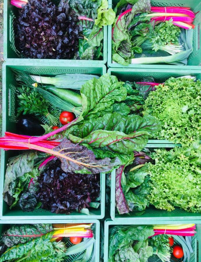 Gemüse Anfang September