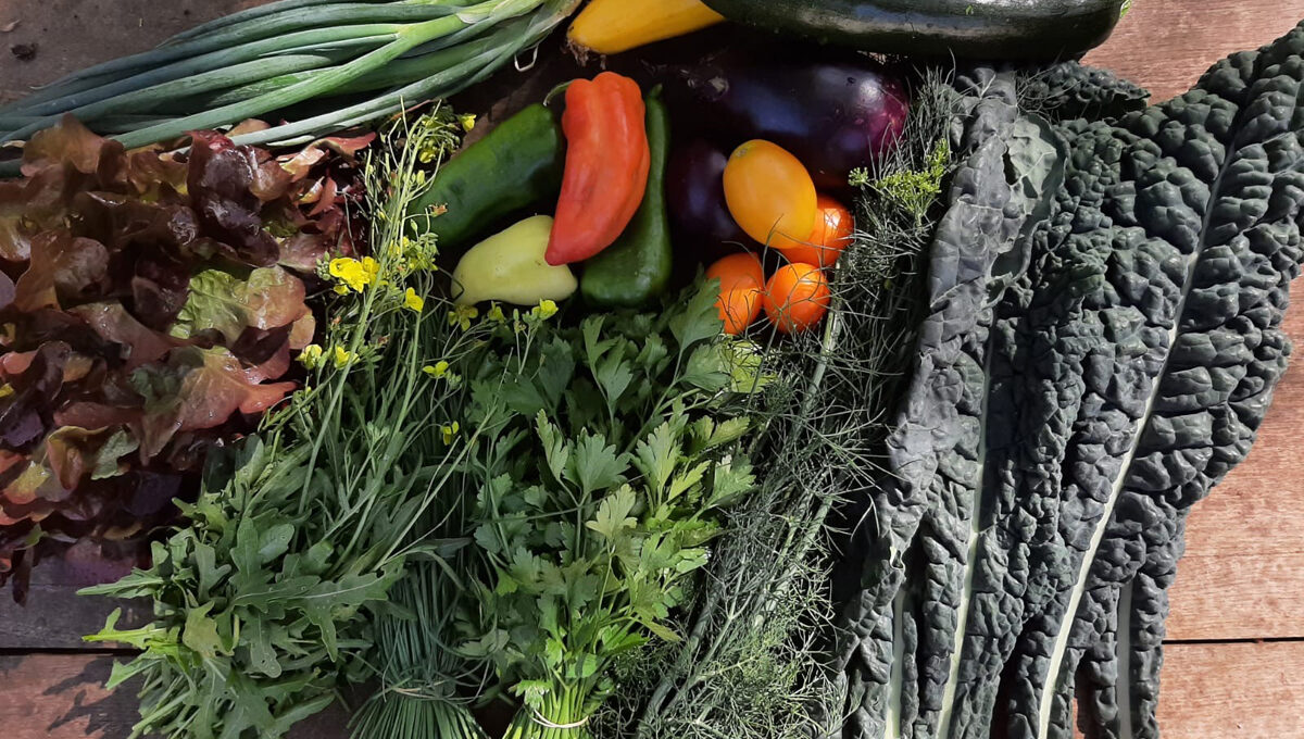 Spätsommer Gemüsekiste