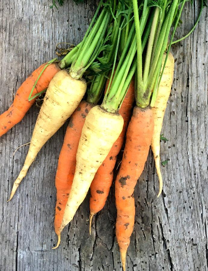 Goldene Karotten