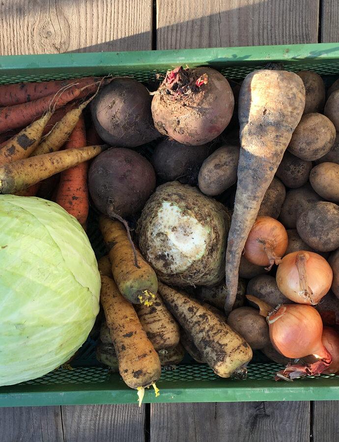 Gemüsekiste im tiefsten Winter