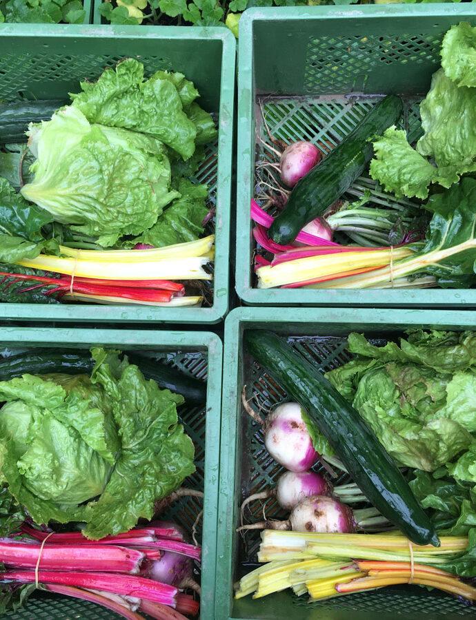 Sommer Gemüse